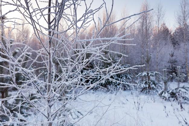 din-have-om-vinteren
