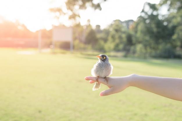 fugle-i-din-have
